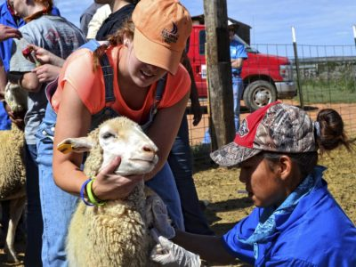 Vaccines and dewormer for a Navajo Churro sheep herd